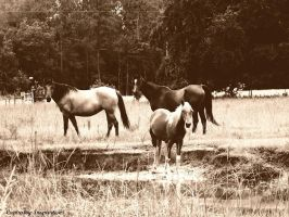 Horses in Black and White by gdsbngd2me