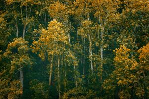 Foret15 by hubert61