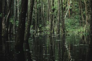 flooded forest by collien