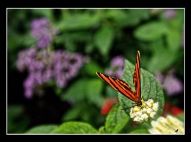 Orange and black butterfly 1 by jennystokes