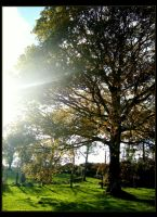 The Lustrous Oak by younghappy