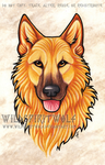 Dingo Dog Portrait by WildSpiritWolf