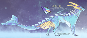 Laburge Reference by Dachindae