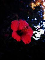 reD flowEr by StrOf
