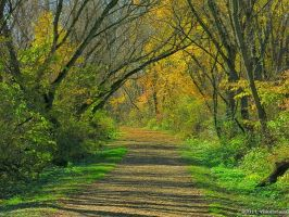 Fall Tunnel 2 by VisionsSeen