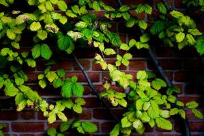 Brick and Vine by SarahRose