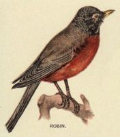 Vintage Robin by HauntingVisionsStock