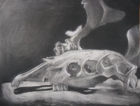 Subtractive charcoal skull 2 by Spring-the-Rabbit