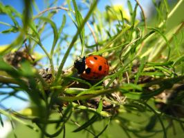 Lady Bug by sidneyj06