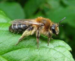 bee close up by dutchway