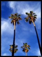 Palms in the Blue by MiMi-MosH