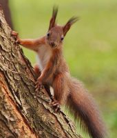 Do you have a nut for me? by starykocur