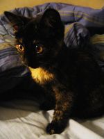 my new kitten by ToryHartley