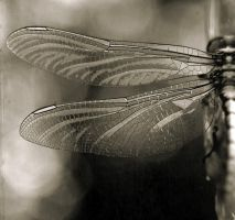 dragonfly by panpropanbutan