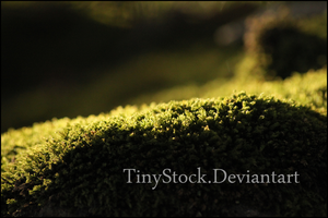 Moss1 by TinyStock
