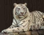Love Tiger by 4Snowey