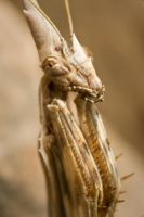 mantis 1 by scott-leeson