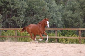 ASH cantering front 3.4 by Chunga-Stock