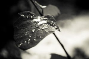 Black and White Droplets by EvanHodsonGallery