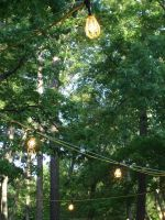 Lights in the Trees by LOSTgnosis
