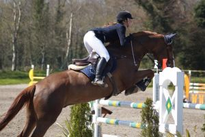 Chestnut Horse - Show jumping stock 5.5 by MagicLecktra