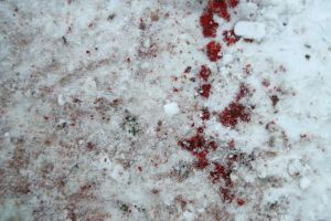 Speckled snow...blood by Arctic-Stock