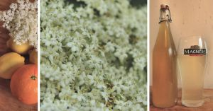 Elderflower Cordial by Aconitum-Napellus