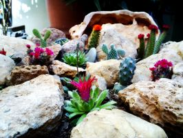 Cactus and Rocks by merage