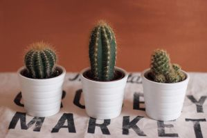 Cactus Market by thedaydreaminggirl