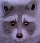 RACOON CLOSE by sinsenor