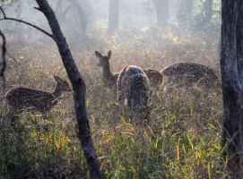 Deer in the mist of morning by Brick-Kiln