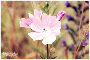 Pink Beauty by Clerdy