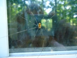spider dirty window by Luciferica