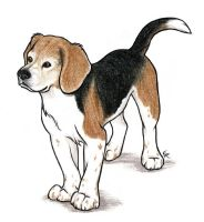 Commission Lily The Beagle by WildSpiritWolf