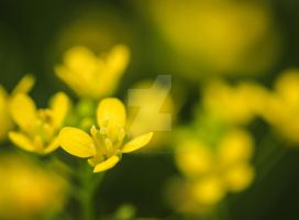 mellow yellow... by clochartist-photo