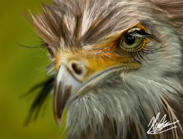 Eagle by neoyurin