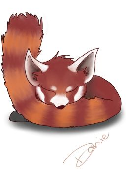 Snoozing Red Panda by westernphilosopher