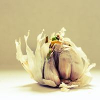 Garlic by Rob1962
