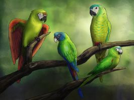 Forgotten macaws by RiverRaven