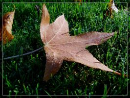 wet leaf in the autumn sun by webcruiser
