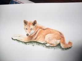 Dingo Painting by DiamondEden