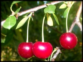 Sour cherry - balls of health by TheRafflesia