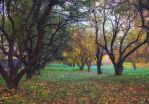 Autumn forest 2 by PhotoTori