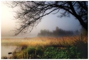 Morning Fog On River by pp1252