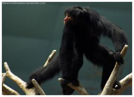 Monkey 017 by ShineOverShadow