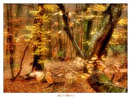 Autumn Forest II. by zozzy1980