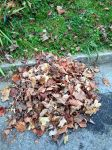 Small Leaf Pile by PharaohAtisLioness