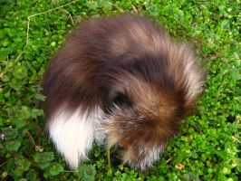 Cinnamon Fox Tail - For Sale! by SPWilder