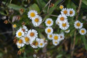 More Pretty Weeds by Gr8-Gatensby