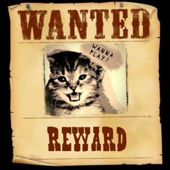 Wanted by defmakaveli